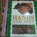 Hands And Feet (Adapting For Survival)