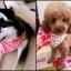 ผ้าพันคอสุนัข และแมว thumbnail 2