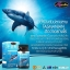 Auswelllife pure squalene 60 เม็ด ราคาส่งทักเลย น้ำมันปลาฉลาม thumbnail 3
