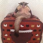กระเป๋าผ้าคอตตอลติดลูกไม้ ไซส์ใหญ่ (พรีเมี่ยม) น้ำตาลแมว