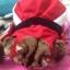 ชุดซานตารีนา+หมวก ไซส์ L (เด็กโตท้วม-อ้วนมาก) thumbnail 2