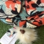 Kipling City Pack S Go Twist ลาย Stripe Quilt K1801454Z thumbnail 16