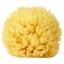 ฟองน้ำธรรมชาติแท้ 100% สำหรับอาบน้ำทารก Greek Natural Sea Sponge thumbnail 1