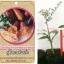 <<<<สั่งซื้อ>>>>ต้นมะนาวคาเวียร์เสียบยอดสายพันธุ์ Judy's Everbearing Fingerlime Size S thumbnail 1