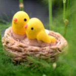นกน้อยในรังสองตัว (Orile bird)