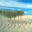 ต้นมะพร้าว (สเกล 1:150) แพ็ค 10 ต้น สูง 7 ซ.ม. thumbnail 1