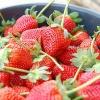สตรอว์เบอร์รี (Strawberry) โลละ 0 บาท