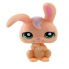 กระต่าย สีส้ม ตาสีเขียว