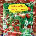 OP22 มะเขือเทศสีดา Seeda Tomato