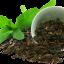 กลิ่นชาเขียว ( Green Tea ) thumbnail 1