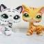 แพ็คคู่แมวลายเสือ ขาว-เหลือง thumbnail 1