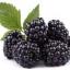 กลิ่นแบล็คเบอรี่ (พรีเมี่ยม) ( Blackberry Flavor ) thumbnail 1