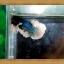 ปลากัดครีบยาว-Fancy Halfmoon Plakats thumbnail 3