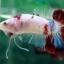 """(ขายแล้วครับ)NICE LOVEBETTAFISH KOI """"คัดเกรด""""ปลากัดครีบสั้น-Halfmoon Plakats thumbnail 2"""