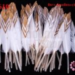 ขนนกก้าน สีขาว ปลายสีทอง (1ห่อ/50 ชิ้น)